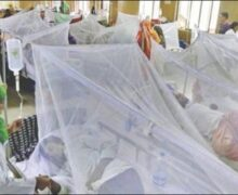 Country sees hospitalisation of 237 more dengue patients in 24 hours