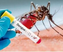 224 dengue patients hospitalized in 24 hours